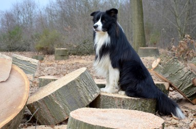 dog-2084998_1280